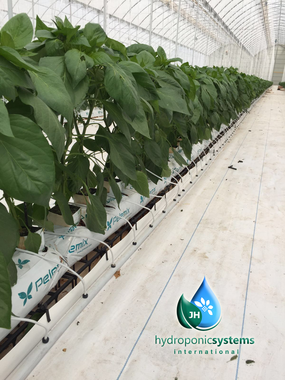 HS Spacer, el producto estrella de Hydroponic System International.